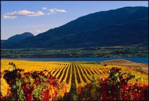 Kelowna wine industry